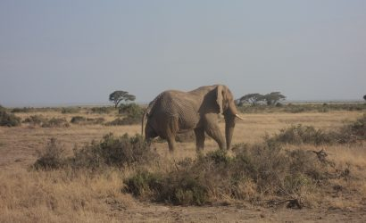 Amboseli by air skywide travel packages