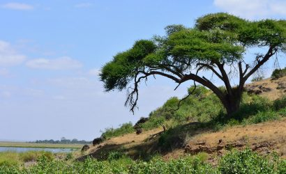 Amboseli by Road skywide travel packages