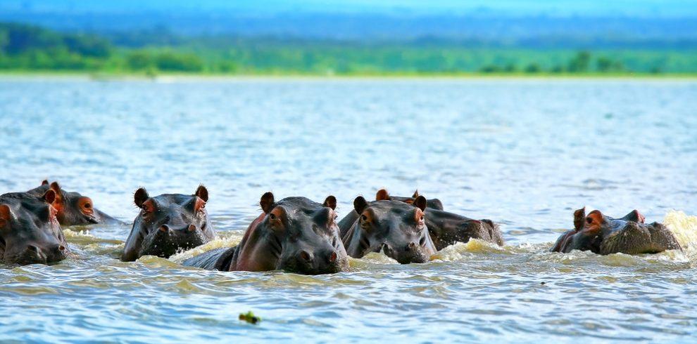 Family+of+hippos+on+lake+Naivasha