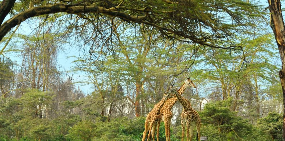 Great Rift Valley Scenery & Masai Mara Expedition Skywide tours